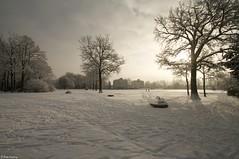 Sneeuw in het Volkspark Enschede