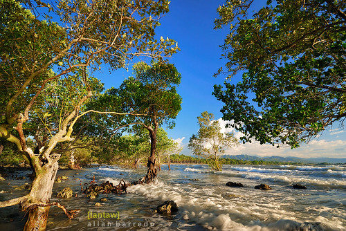 Late Afternoon at the Mangroves