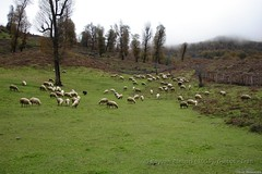 Damash, North of Iran (**Kevin**) Tags: iran  gilan  shomal  northofiran   guilan     iranmap iranmapcom