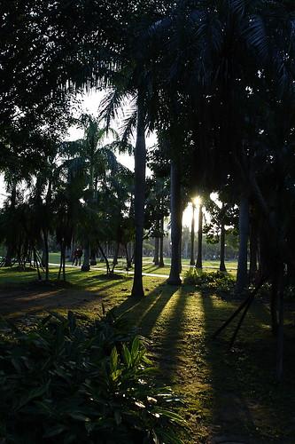 2010大安森林公園花卉展