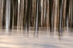 (jonlp) Tags: snow forest landscape elurra basoa pagadia beechforest intentionalcameramovement paisajea higiduracamerashake