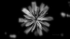 Cosmic Blur ©