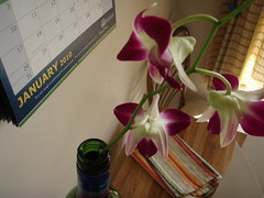 kitchen table orchid