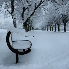 Winter Bench (Asim237) Tags: park trees winter snow bench day fields platt snowed asim237