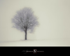 Alive in the Dead of Winter (Loren Zemlicka) Tags: winter mist snow tree nature field fog wisconsin landscape photography photo midwest frost image branches january picture explore lonetree 2010 fitchburg canoneos5d flickrexplore canonef100 f28macrousm lorenzemlicka
