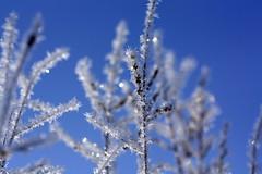 Glitzerbaum (Lacaosa) Tags: schnee winter snow ice germany deutschland neve eis inverno ghiaccio landshut gettyimagesgermanyq1