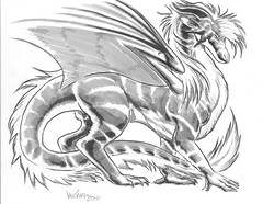 Maned Dragon
