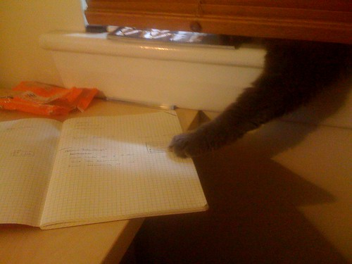 Kitteh wants moleskine