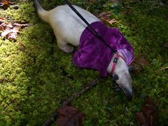 Pua in the moss