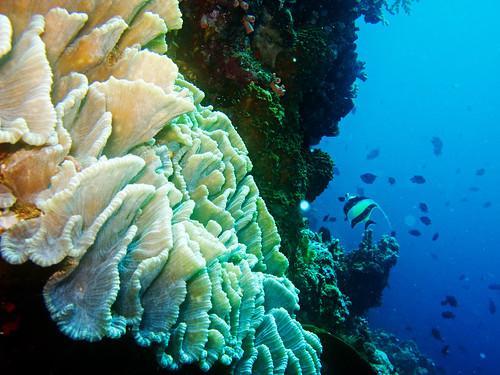 Bunaken Underwater 19