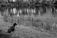 Hoping against Hope ( RaZiel ) Tags: uk dog london against cane hope nikon andrea d200 nikkor hampsteadheath londra fux  raziel   highgateponds 1835mm sperare   hopeagainsthope andreafux