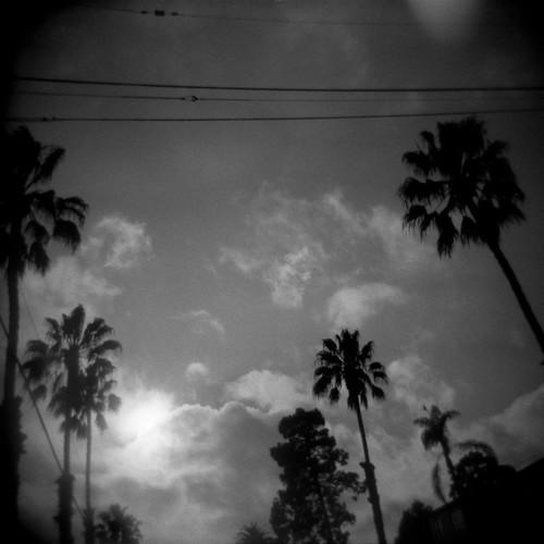 Street Palms