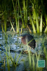 Brazos Bend State Park (Texas Parks and Wildlife) Tags: river brazosbendstatepark floodplains brazosriver freshwatermarshes brazosriverfloodplainsfloodplains