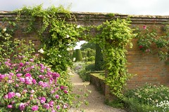 Mottisfont Abbey, Hampshire (teresue) Tags: uk greatbritain flowers roses england flower garden geotagged unitedkingdom hampshire nationaltrust 2007 romsey mottisfontabbey southse ilroseto geotaggedengland