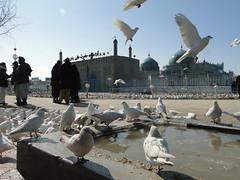 DSC08926 (huxley1312) Tags: afghanistan sharif mazare