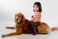 My Girls (lawrencechua) Tags: dog white zach umbrella studio golden toddler cowboy shoot sb600 retriever cal adobe belle retreiver westcott studios kayla seamless afs brea arias savage lightroom thru sb800 2470 so strobist nikond700