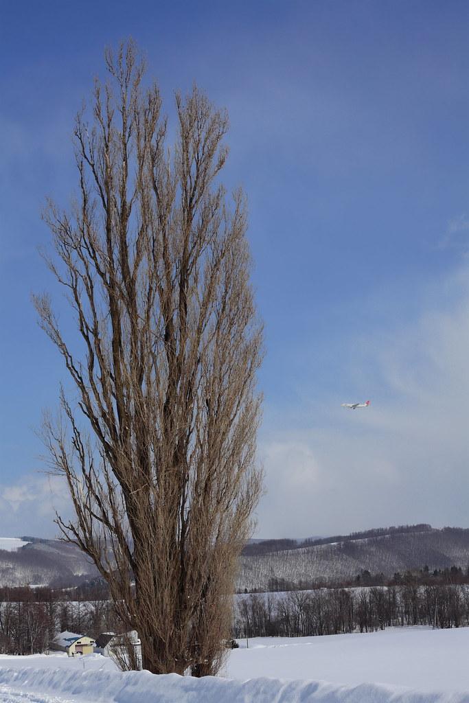 ケンメリの木 とJAL機