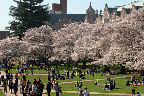 Spring at UW Quad