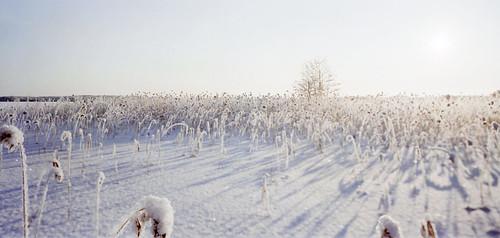 snowyJarviRuoko