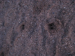 Desert Sunrise Tucson AZ 2010 03 09 011