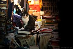 felini colti (Mari.ella) Tags: cat venezia gatti coltopercaso