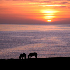 Coucher de soleil sur l'Ocan Atlantique (rogermarcel) Tags: france nature landscape paysage coucherdesoleil chevaux ocan