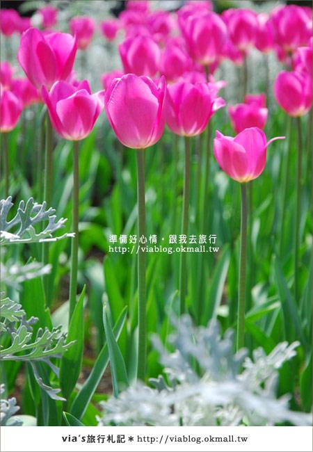【梅峰農場】不止桃花美!梅峰農場賞花趣~(下)13