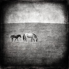 Mare and Foal (carlos Restrepo) Tags: horses nature animal vintage landscape hill pony pasture stroll grazing connection equine textured foal layered