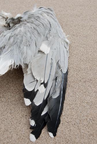 March Gull III