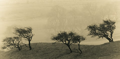 Five Trees at Malham (1963chris) Tags: trees landscape raw view five sony yorkshire scenic dales malham yorkshiredales malhamcove platinumphoto mygearandmebronze mygearandmesilver