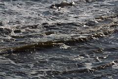 Sea texture 7