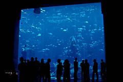 Aquarium ATLANTIS Hotel Dubai (SAM OMAN) Tags: fish aquarium hotel dubai gulf uae palm atlantis الخليج دبي الامارات aquaventure emarates jumera