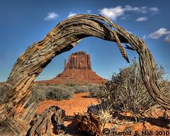 East Mitten and Arched Limb (Harold Hall) Tags: tree monument utah branch arch desert framed valley cedar juniper mittens