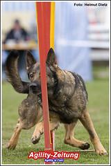 Agility-Foto-2318-Helmut-Dietz-DSH-Deutscher Schäferhund