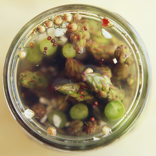 Pickled Asparagus}