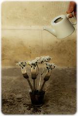 C'est le printemps ! (  Pounkie  ) Tags: flowers selfportrait me fleurs self hand autoportrait main fork moi explore fourchette arrosoir absurde  cestleprintemps arroser pounkie dfiself bouquetdefourchettes expobdm092011 expolemojomatic122011