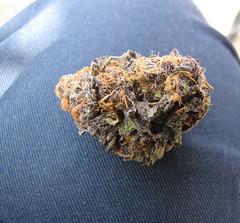 today is 420 (alan guido) Tags: plant 420 bud cannabis medicalcannabis