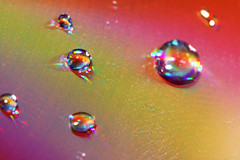 020/365 :: Prismatic Droplets (matthileo) Tags: light macro reflection water closeup droplets drops rainbow cd canonef100mmf28lisusm nattywallpaper