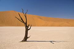 Sossusvlei (andreaskoeberl) Tags: africa tree sand nikon desert dunes dry canyon deadtree sesriem namibia sossusvlei namib deadvlei d40x fcgiconwinner nauklift andreaskoeberl