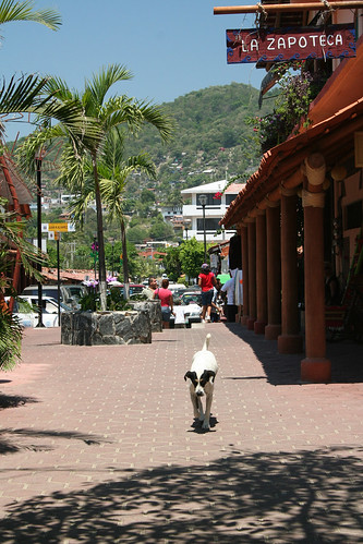 Zihuatanejo - Dog Approaching