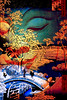 Orient (Taluula2two) Tags: oriental spa outofthisworld dover anycolouryoulike tanakawho awardtree skeletalmess artuniinternational visiblytalented