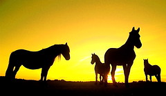 Still horsing around :) (The Family Dog) Tags: horse color animals yellow composition silhouettes frisian soulscapes
