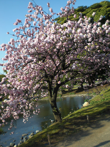 浜離宮恩賜庭園 - Hama-rikyu Gardens