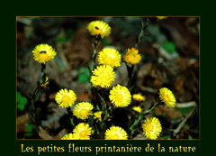 Les belles couleurs du printemps (Suzanne82) Tags: nature fleur fantasticflower printenps nicond60