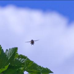 20100501 tuin2536v (jos....) Tags: macro closeup insect natuur tuin dier tokina100mmf28atxprod