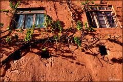 Hope امید (Behzad No) Tags: life road old city sun tree window persian day alone iran dream strong iranian kashan abyaneh parseh anawesomeshot nikond90 iranmap behzadno behzadnoorifard