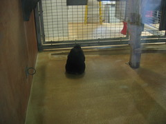 IMG_0926 (superdubey) Tags: zoo dc washington national dc08