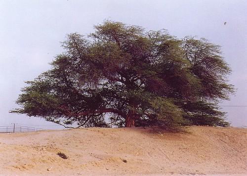 bahrain05