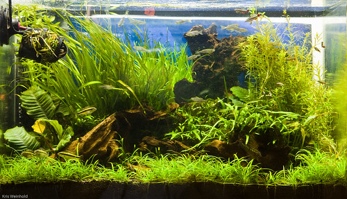 20H Aquascape - May 18, 2010