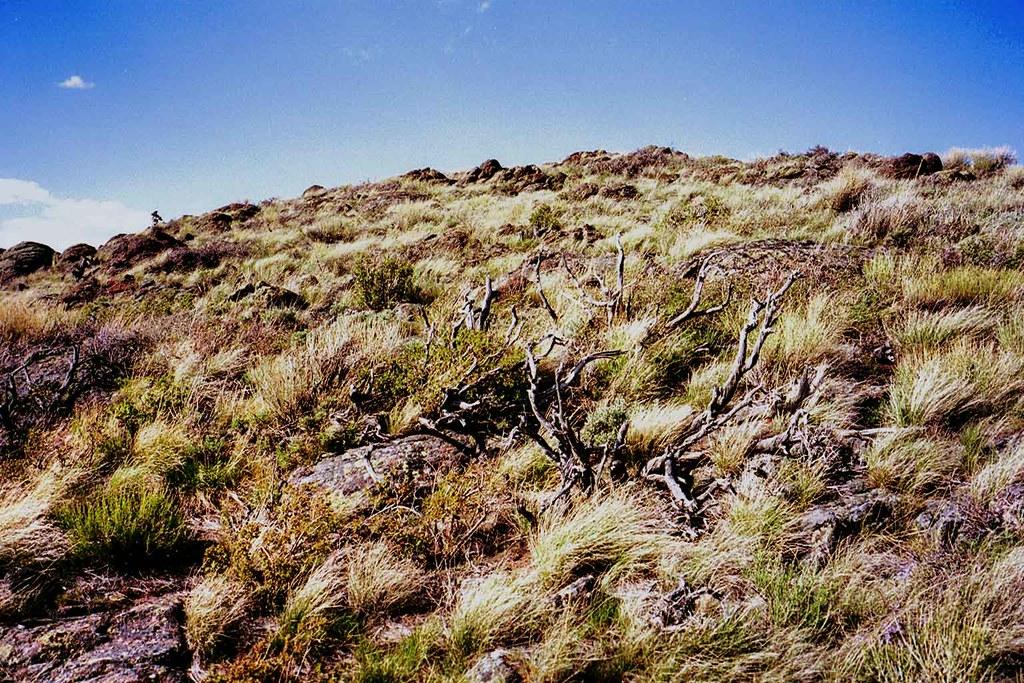 Sunlit-Hill1